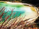 fenicotteri Pantelleria - Foto di Tommaso Brignone