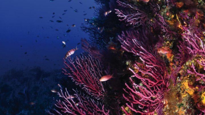 pantelleria mare area marina protetta