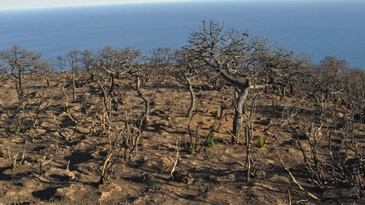 10 mila alberi per pantelleria