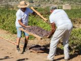 viddrano pantelleria
