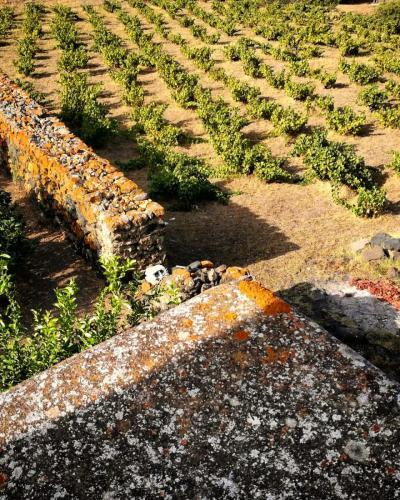 Pantelleria di Tommaso Brignone 154